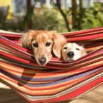 老犬の過食を防ぐ方法とオススメの対策グッズ